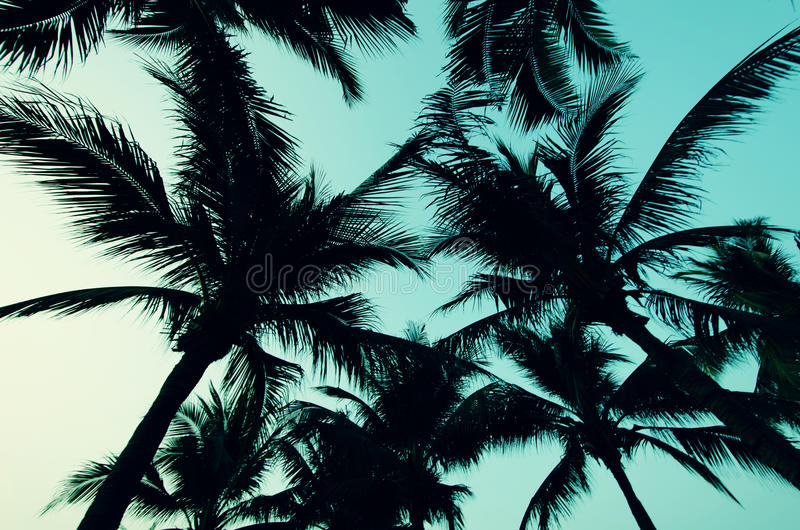 Palmenwijnoogst stock foto