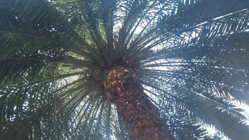 palmer zdjęcia stock