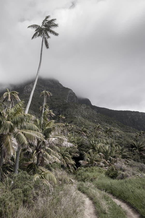 Palmera alta sobre la pista Lord Howe Island de la selva tropical imagen de archivo libre de regalías