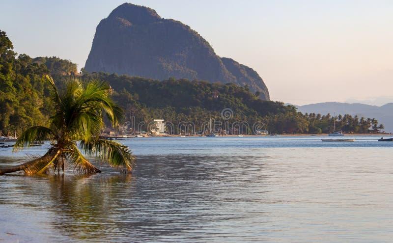 Palmera caida en puerto tropical por la tarde con la montaña grande en horizonte Puesta del sol en la laguna en Filipinas, Palawa fotografía de archivo libre de regalías
