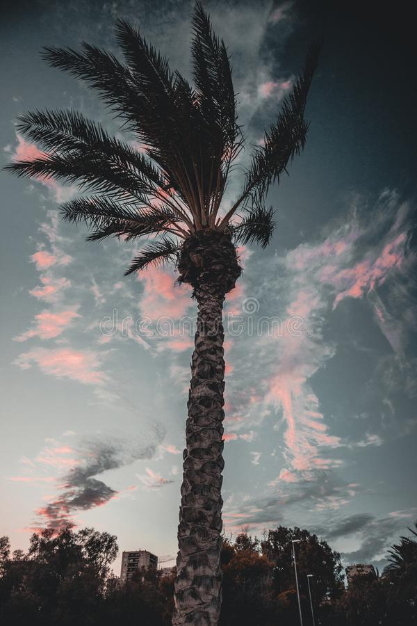 Palmera con el cielo detrás imágenes de archivo libres de regalías