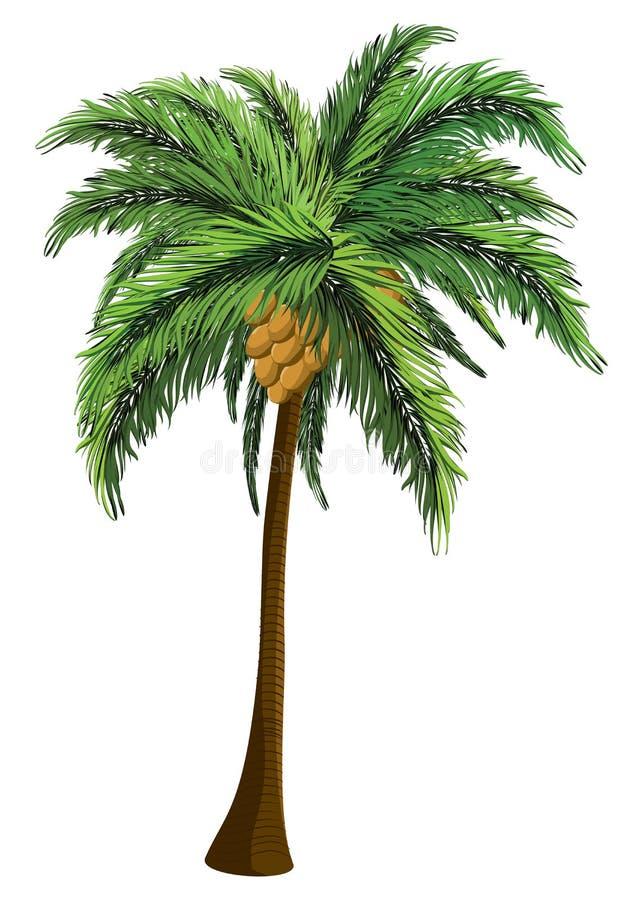 Palmera con el coco stock de ilustración