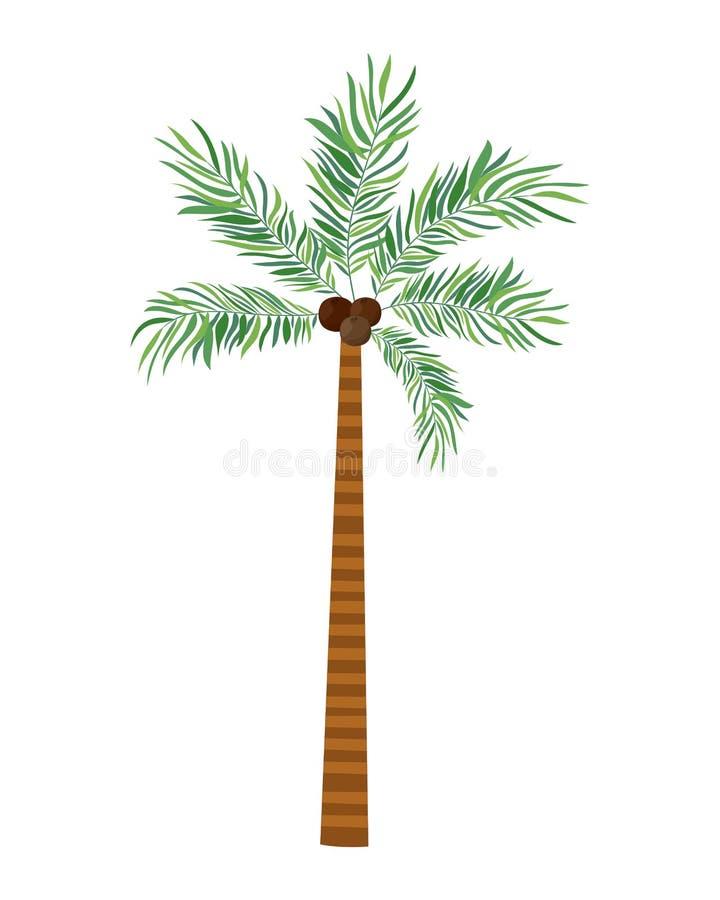 Palmera con el coco en el fondo blanco stock de ilustración