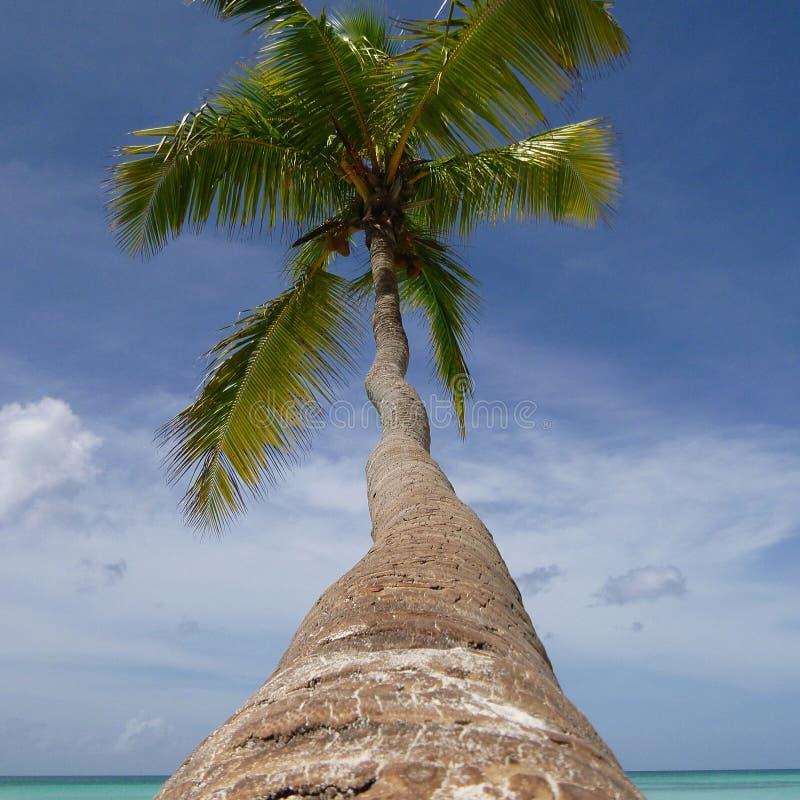 Palmera con un tronco largo que cuelga sobre la costa del mar del Caribe Alrededor, silencio, paz y Paradise brillante foto de archivo
