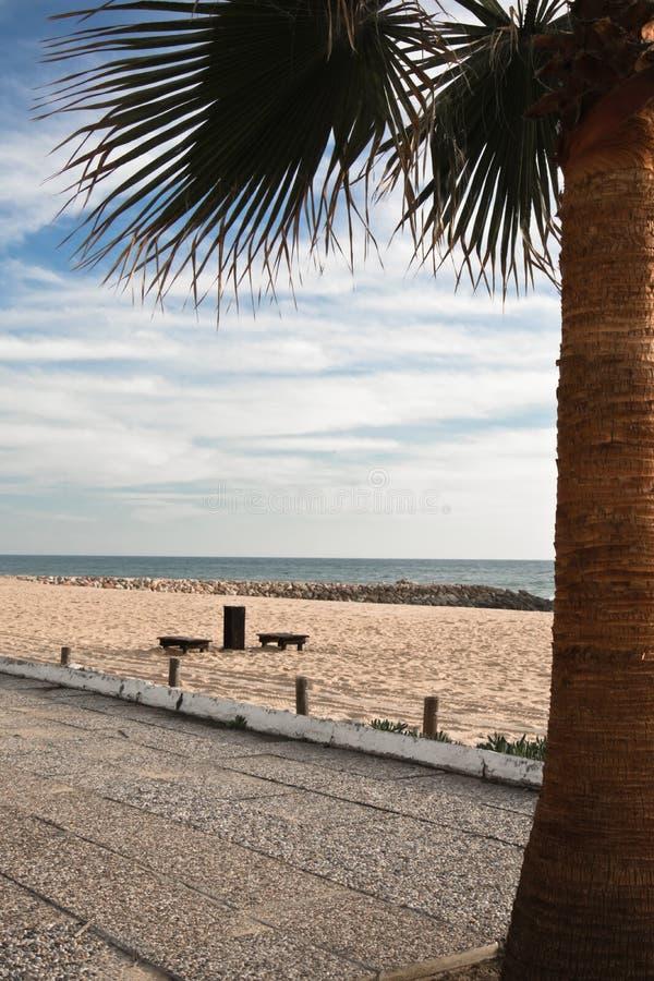 Palmera de la invitación del viaje por la playa arenosa hermosa y océano en cielo azul colorido imagen de archivo libre de regalías