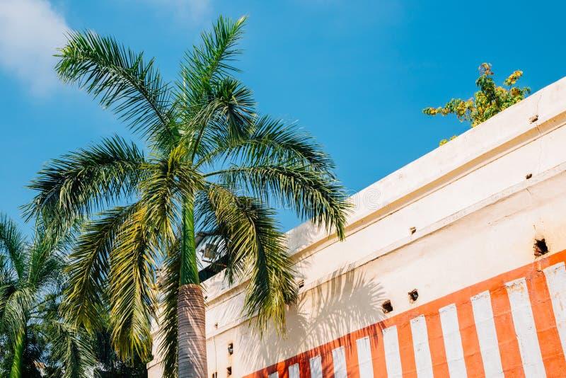 Palmera debajo del cielo azul en Madurai, la India fotos de archivo