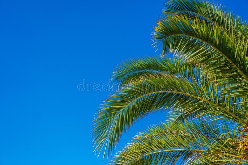 Download Palmera Del Coco En El Cielo Azul Imagen de archivo - Imagen de fondo, paraíso: 100525909