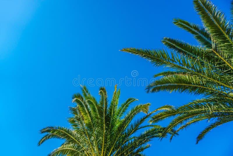 Download Palmera Del Coco En El Cielo Azul Imagen de archivo - Imagen de cielo, paraíso: 100525955