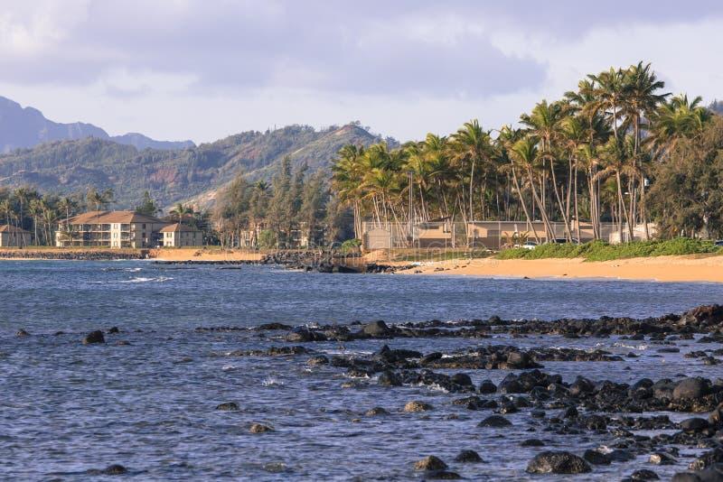Palmera del coco en la playa arenosa en Kapaa Hawaii, Kauai imagen de archivo libre de regalías