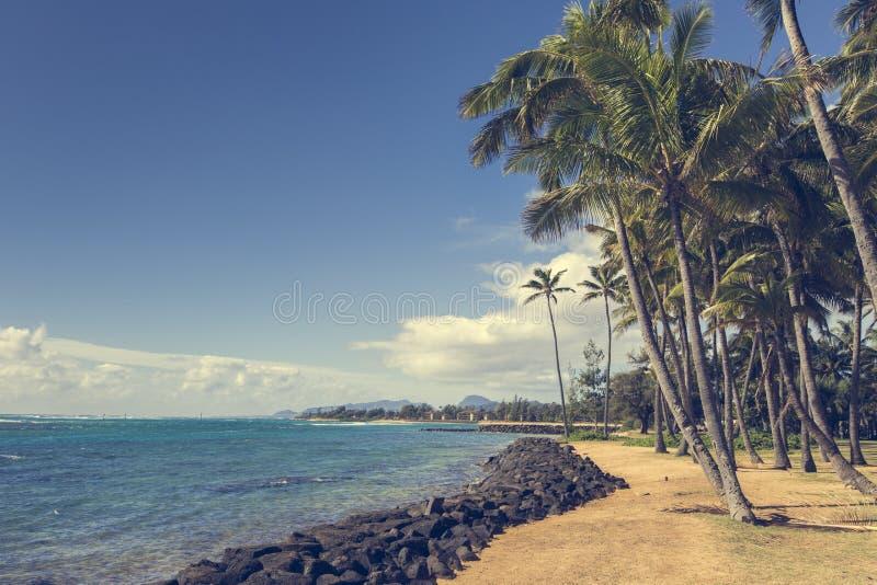 Palmera del coco en la playa arenosa en Kapaa Hawaii, Kauai fotografía de archivo libre de regalías