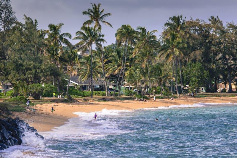 Palmera del coco en la playa arenosa en Kapaa Hawaii, Kauai imagenes de archivo