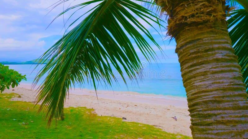 Palmera del coco en la playa arenosa en Hawaii, Kauai || palmeras en fondo del cielo azul fotos de archivo
