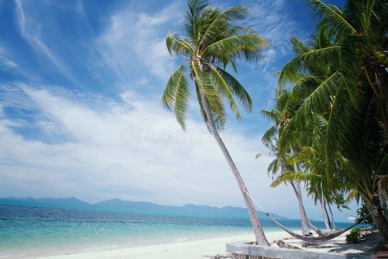 Palmera del coco en la sol y el mar arenoso a del playa y tropical imagen de archivo libre de regalías