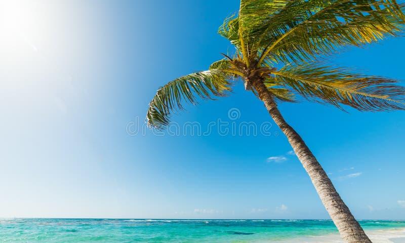 Palmera del coco que se inclina sobre el mar en la playa de Clairs de las pasas imagen de archivo libre de regalías