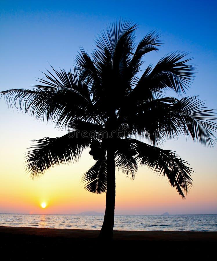 Palmera del coco silueteada contra salida del sol imagenes de archivo