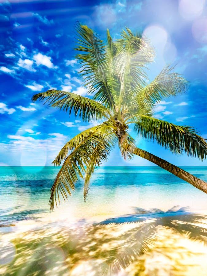 Palmera del coco sobre el mar tropical blanco de la arena y de la turquesa imagenes de archivo