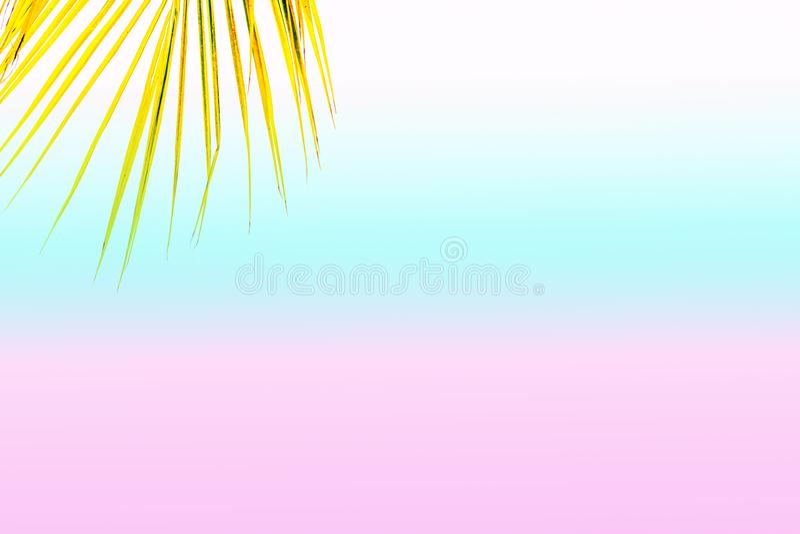 Palmera del verano en el cielo azul y las nubes con el espacio de la copia Concepto mínimo Tonos en colores pastel imagenes de archivo