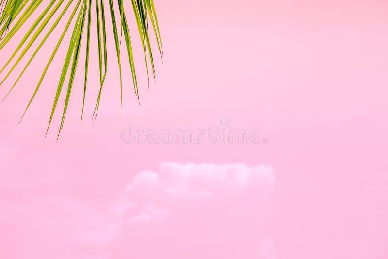 Palmera del verano en el cielo azul y las nubes con el espacio de la copia Concepto mínimo Tonos en colores pastel fotografía de archivo libre de regalías