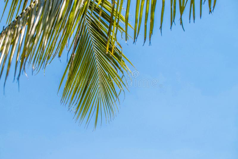 Palmera del verano en el cielo azul y las nubes con el espacio de la copia Concepto mínimo Tonos en colores pastel fotos de archivo libres de regalías