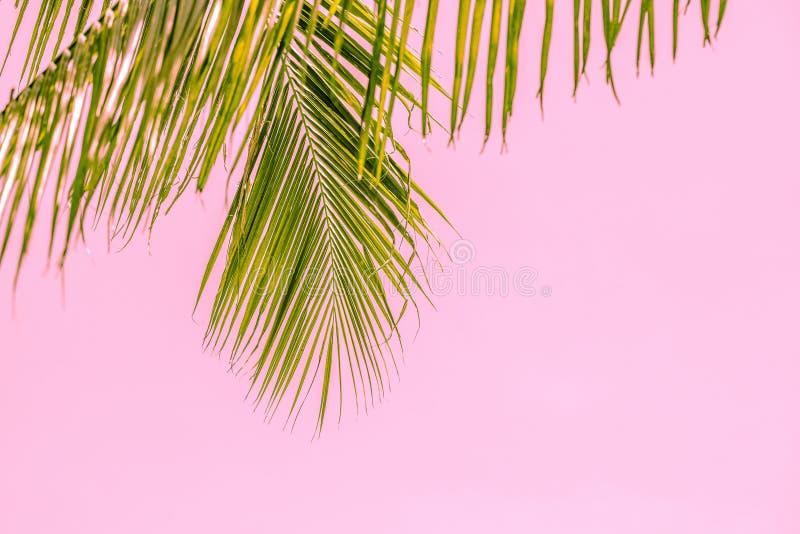 Palmera del verano en el cielo azul y las nubes con el espacio de la copia Concepto mínimo Tonos en colores pastel fotos de archivo