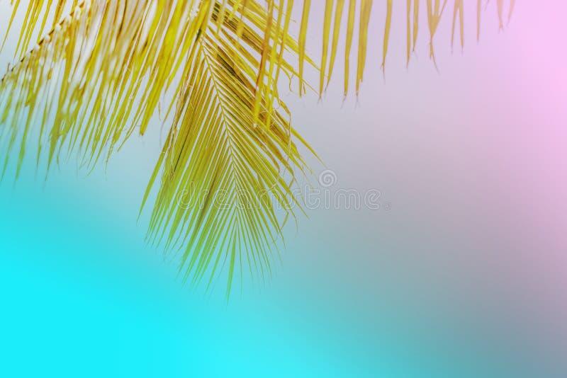 Palmera del verano en el cielo azul y las nubes con el espacio de la copia Concepto mínimo Tonos en colores pastel imágenes de archivo libres de regalías