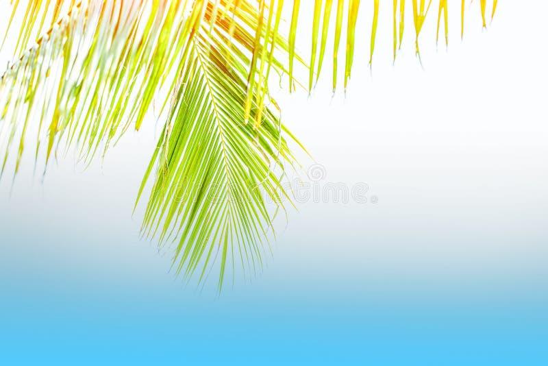 Palmera del verano en el cielo azul y las nubes con el espacio de la copia Concepto mínimo Tonos en colores pastel Fondo borroso imagenes de archivo