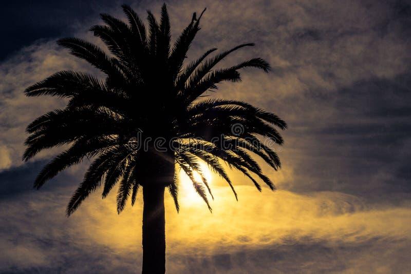 Palmera en California imagenes de archivo