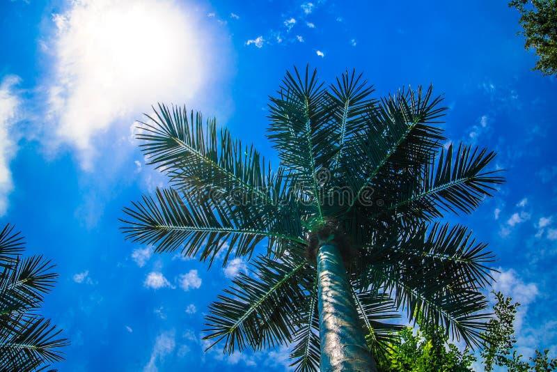 Palmera en el fondo del cielo azul con las nubes imágenes de archivo libres de regalías