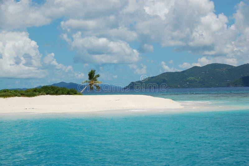 Palmera en la isla del paraíso imagen de archivo libre de regalías