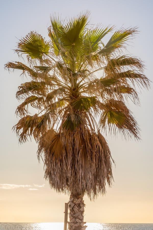 Palmera en la playa con el contraluz del sol en la puesta del sol fotos de archivo