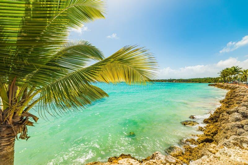 Palmera en la playa de Sainte Anne en la isla de Guadalupe imagenes de archivo