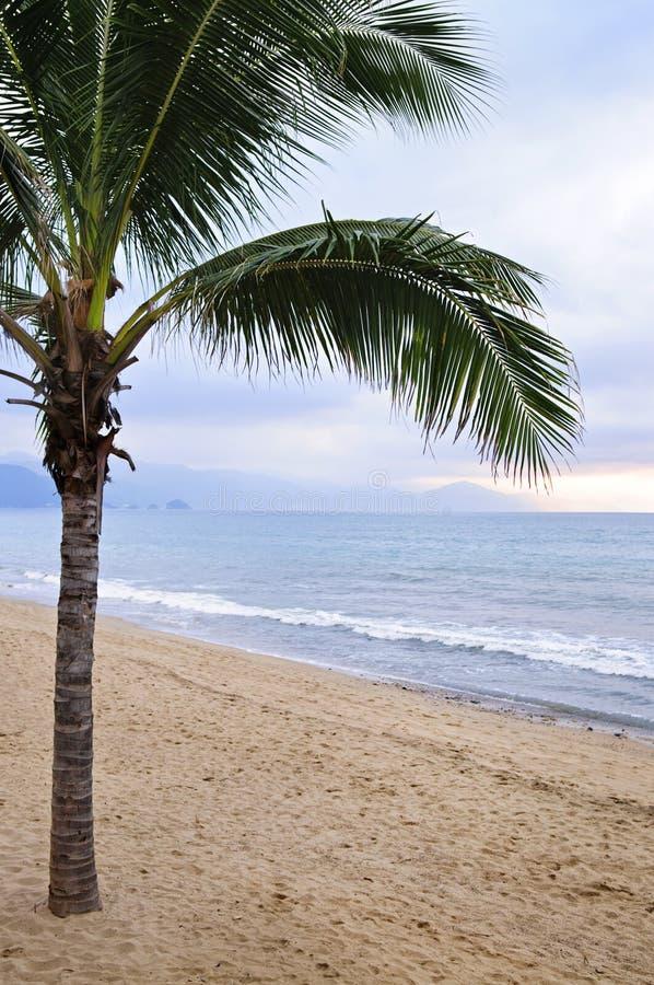 Palmera en la playa en Puerto Vallarta México foto de archivo libre de regalías