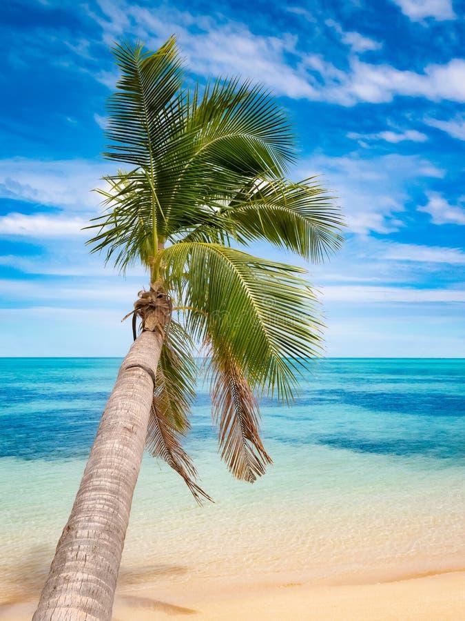 Palmera en la playa tropical con el mar blanco de la arena y de la turquesa foto de archivo