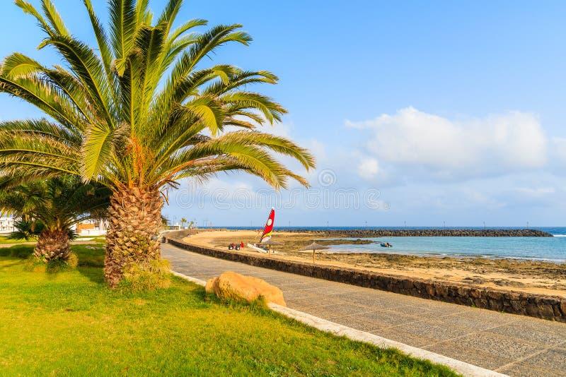 Palmera en la 'promenade' costera fotografía de archivo libre de regalías