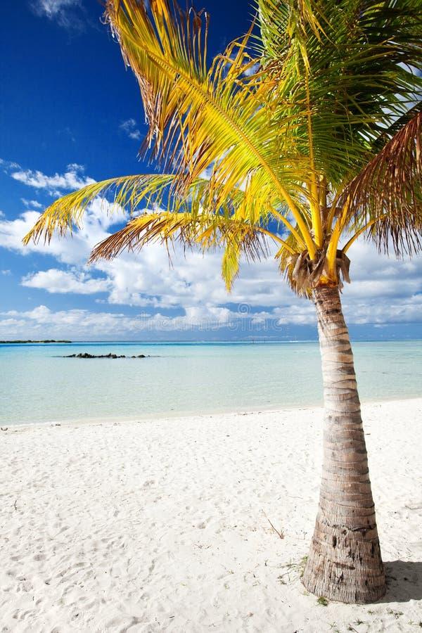 Palmera en una playa tropical abandonada imagen de archivo