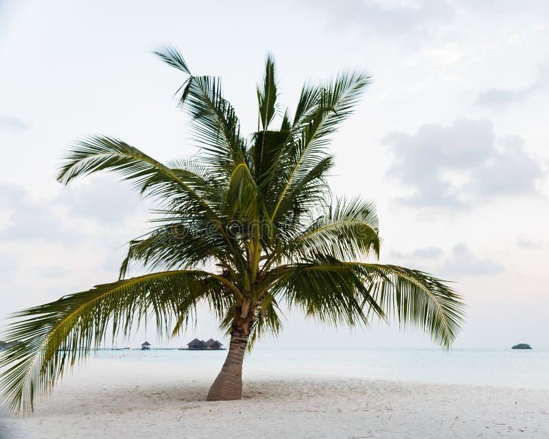 Palmera hermosa en la playa fotos de archivo libres de regalías