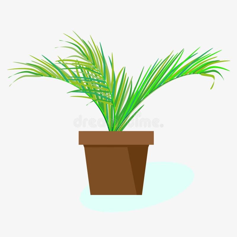Palmera interior de la planta tropical en pote Dibujo del vector en el fondo blanco stock de ilustración