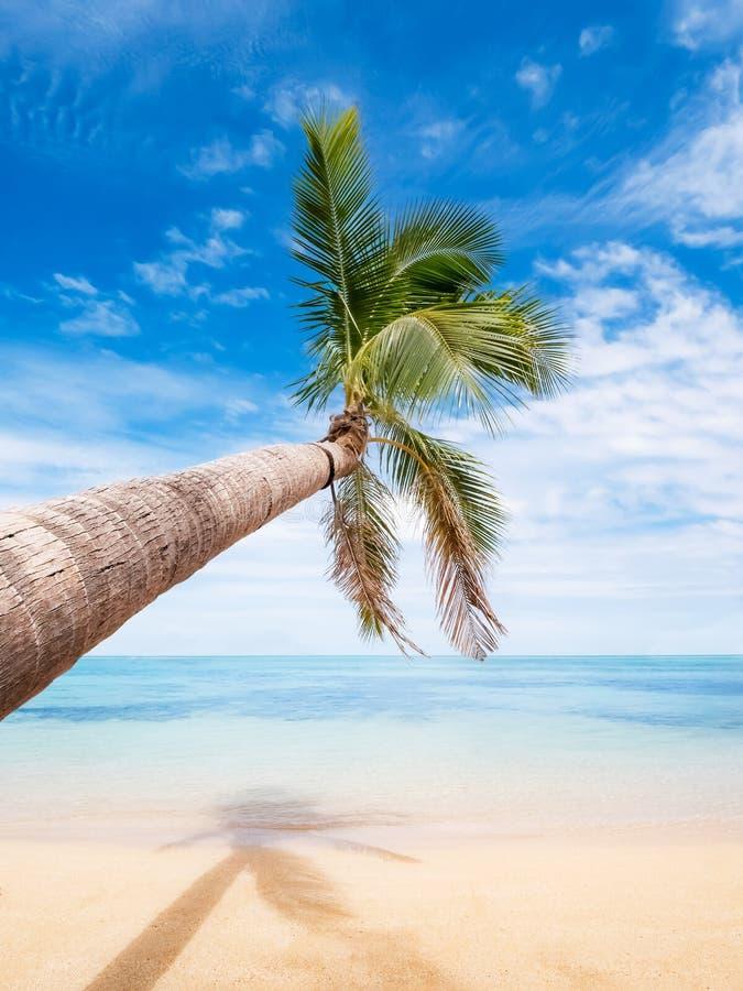 Palmera que dobla sobre el mar de la turquesa en una isla del paraíso fotos de archivo libres de regalías