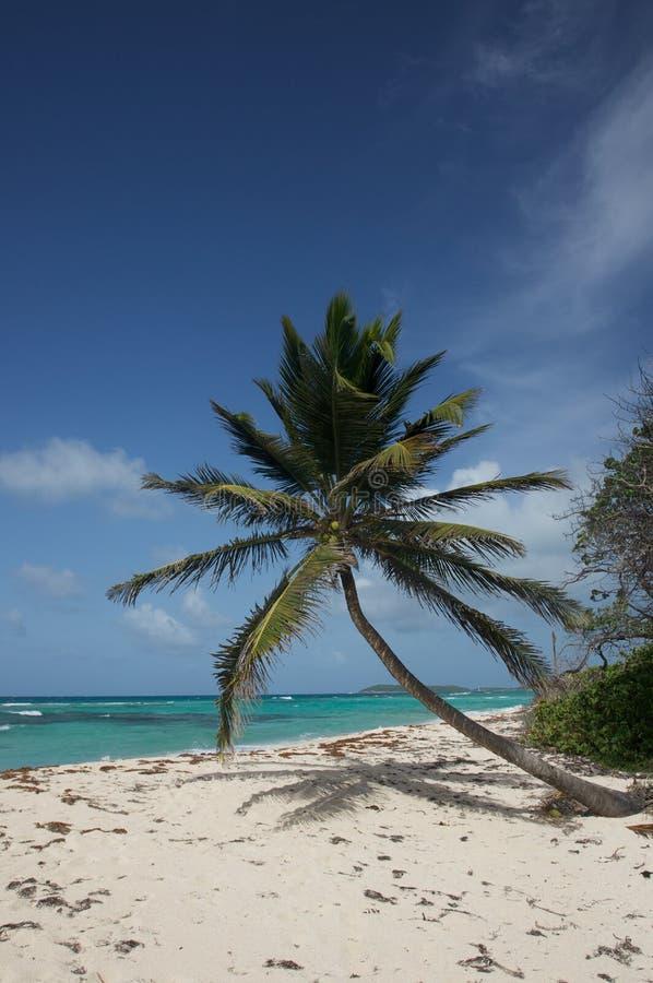 Palmera que se inclina en la playa fotos de archivo