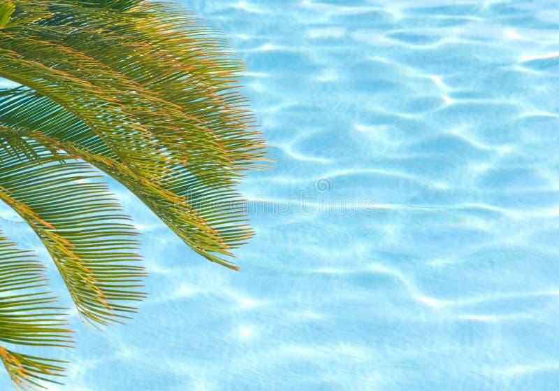 Palmera sobre piscina fotografía de archivo