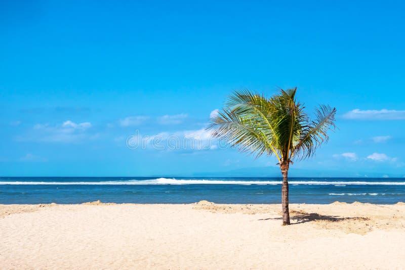 Palmera solitaria en una playa tropical en Bali, Indonesia imagen de archivo