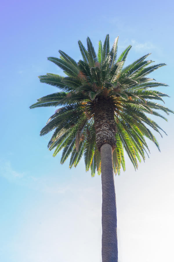 Palmera tropical imagen de archivo libre de regalías