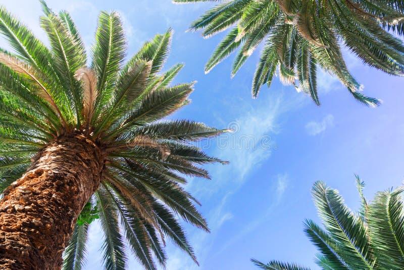 Palmera tropical imágenes de archivo libres de regalías