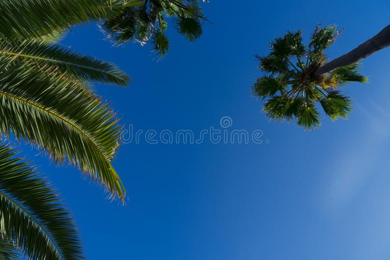Palmera tropical fotos de archivo libres de regalías