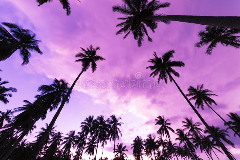 Palmera tropical hermosa del coco en vagos de la puesta del sol o del cielo de la salida del sol foto de archivo libre de regalías