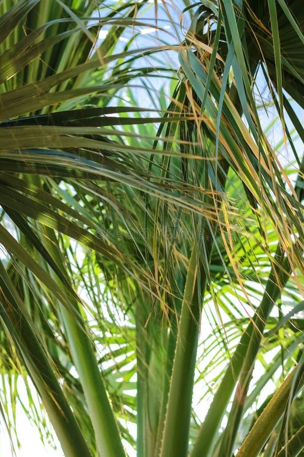 Palmera verde en el viento imagen de archivo