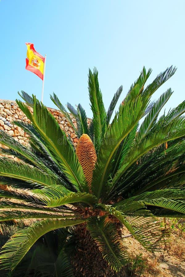 Palmera y bandera española imagen de archivo