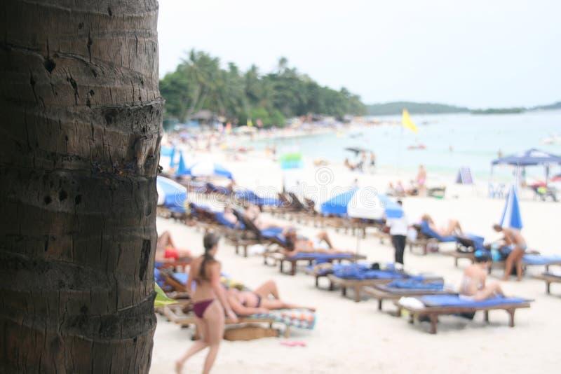 Palmera y playa fotografía de archivo libre de regalías