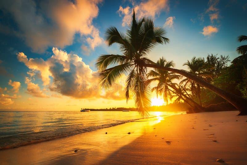 Palmera y playa tropical en Punta Cana, República Dominicana imagenes de archivo
