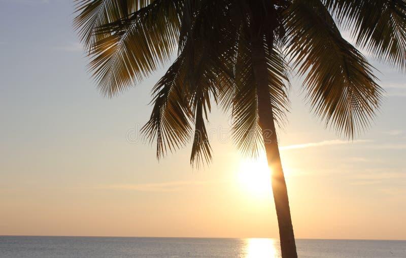 Palmera y puesta del sol imagen de archivo libre de regalías
